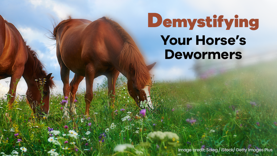 Demystifying Your Horse's Dewormers
